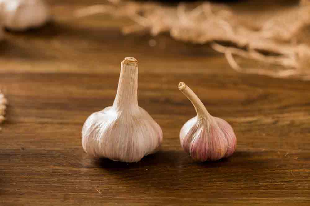 Spanish-Garlic-(L)-and-Korean-Garlic-(R)