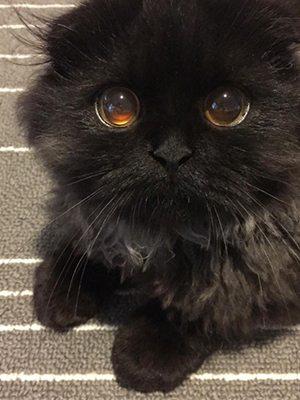 韓國療癒系寵物KOL❤話咁易就坐擁幾十萬followers
