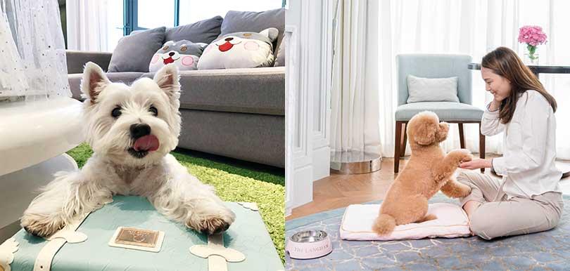 帶毛孩一起去Dogcation放電吧!5間寵物友好酒店全新住宿優惠