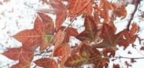 【低碳少女綠遊記】隱藏美孚的園林景致
