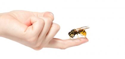 蜂毒抗皺效果媲美肉毒桿菌?