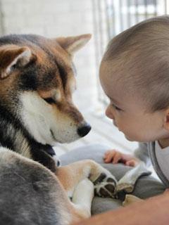 有寶寶家庭養寵物注意事項(上)