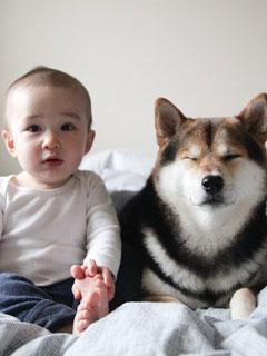 有寶寶家庭養寵物注意事項(下)