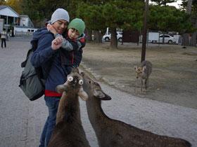 大阪行:奈良餵鹿