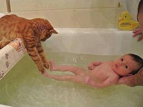 如何教寵物與寶寶和平共處