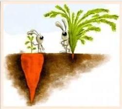 大小蘿蔔的反思