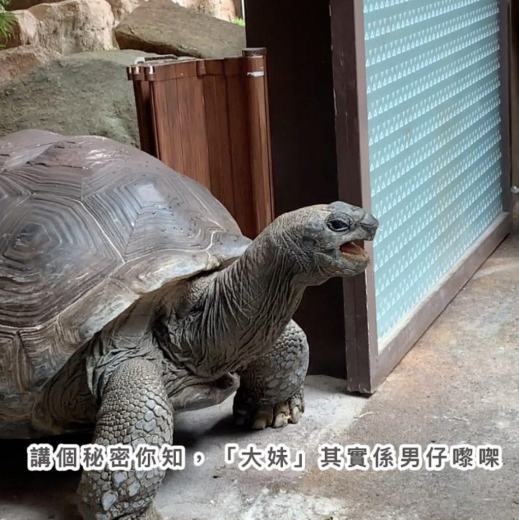 「約會大象龜」