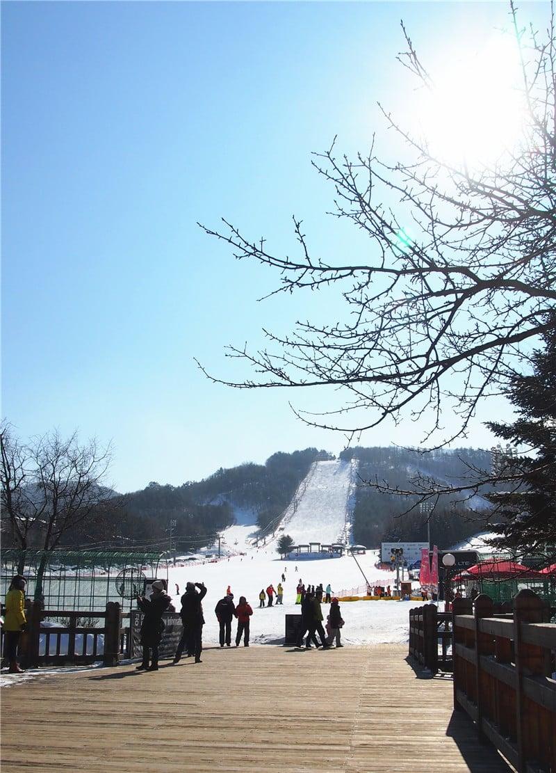 patc korea skiing